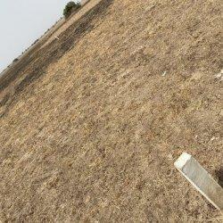 litigation-free-plots-at-tsopoli-new-air