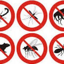pest-control-picture